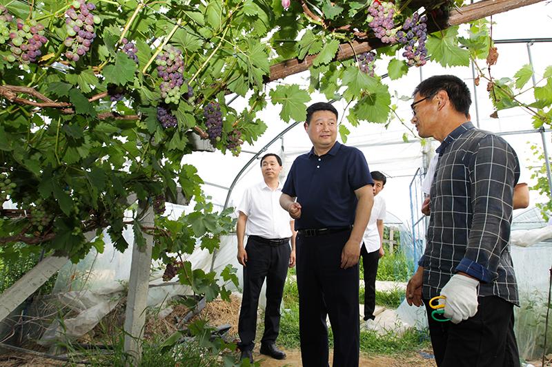 赵军华到乡镇调研项目产业发展